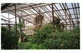 greenhouse1a.jpg